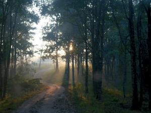All About The Beautiful Town Of Kalpetta
