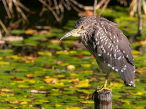 Bengaluru To Mandagadde Bird Sanctuary A Chirpy Ride