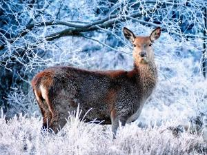 Breathe In The Himalayan Wilderness At Askot Musk Deer Sanctuary
