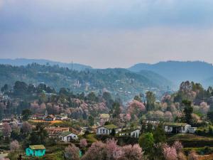 The Cherry Blossom Festival At Shillong