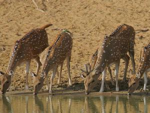 A Visit To Hazaribagh National Park In Jharkhand