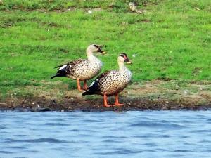 Travel Aid To The Sur Sarovar Bird Sanctuary