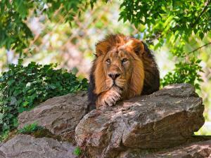 Spotting Wildlife Unique Wildlife Sanctuaries Of India