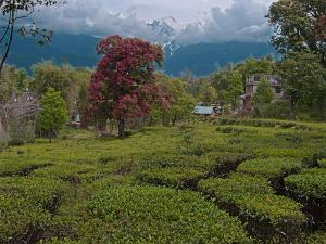From Delhi To Palampur The Tea Capital Of North India