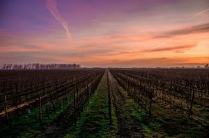 Wine Destinations Of India