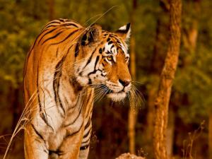 Most Visited Wildlife Sanctuaries Of India In