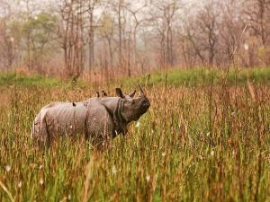 Places India To Spot One Hornes Rhinos