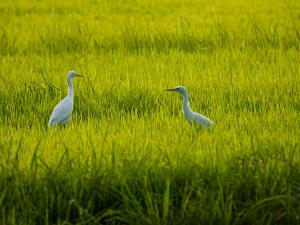 Vedanthangal Bird Sanctuary A Perfect Weekend Getaway From Chennai