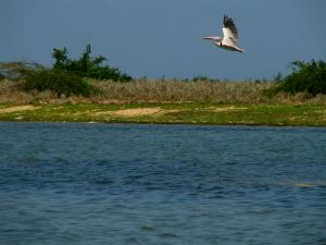 Enjoy The Pristine Lake And Birdlife At Pulicat
