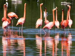 Ahmedabad To Nal Sarovar Bird Sanctuary A Delight For Nature Lovers