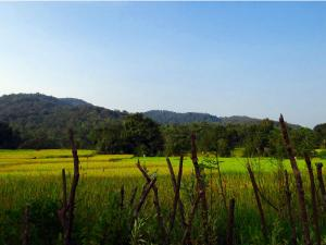Kolkata To Duarsini Amid Rich Forests And Wildlife