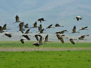 Top Birdwatching Destinations Of Karnataka