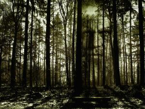 Pachmarhi Haunted Forest Attractions How Reach