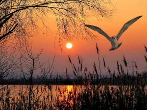 Kanwar Lake Bird Sanctuary Travel Guide Attractions How Rea