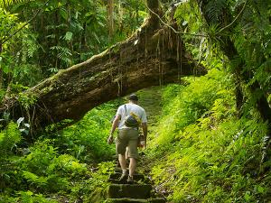 Best Jungle Trekking Destinations India