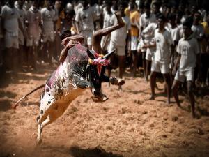 Places To Celebrate Makar Sankranti In India