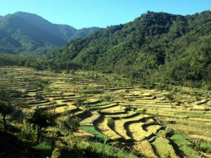 Places To Visit In Nagaland In August 2020