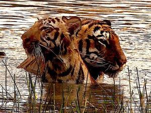 Producer Depshikha Deshmukh shares image