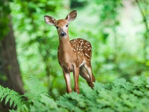 Wildlife Sanctuaries To Visit In India In Monsoon