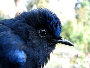 Birds Of Arunachal Pradesh