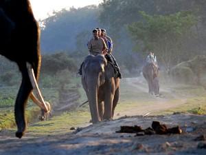 Venture Through Wildlife In Assam