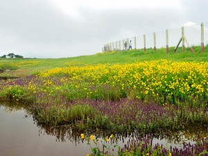 Best Place Visit August September India Kaas Plateau