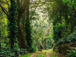 Places Visit Yercaud Salem