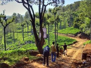 Top 10 Hill Stations Tamil Nadu