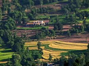 Places Visit Kasauli Himachal Pradesh