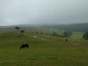 A Road Trip From Bangalore Coorg Via Sakleshpur