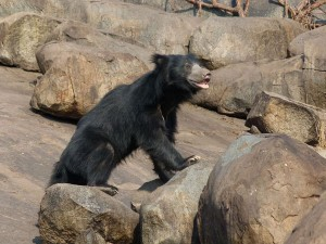 Best Wildlife Sanctuaries In Karnataka