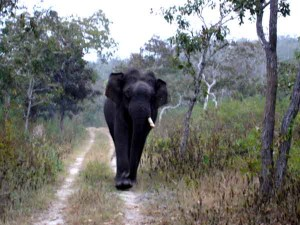 While Crossing Bandipur Forest Reserve