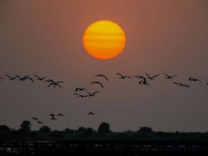Exploring Rann Kutch In Gujarat