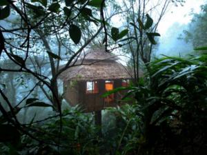 Best Tree House Resorts In Kerala