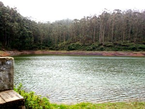 Tiger Hills Ooty Perfect Destination Nature Lovers