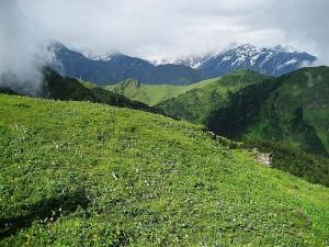 Grasslands In India