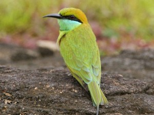 Famous Bird Sanctuaries In Kerala