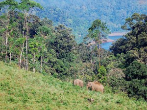 Kerala Trip Plan For 3 Days Munnar Gavi Kumarakom