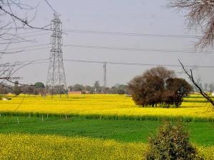 Bhindawas Wildlife Sanctuary In Haryana
