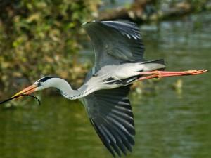 Vedanthangal Bird Sanctuary In Tamil Nadu
