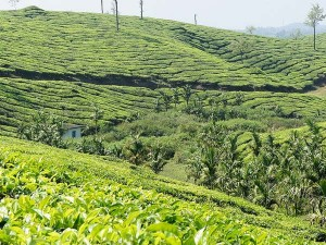 Best Placesto Visit Kerala December