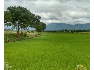 Places To Travel In South India This January