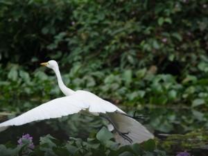 Kumarakom Bird Sanctuary In Kerala
