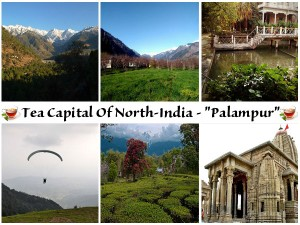 Get To Know Palampur Tea Capital Of North India