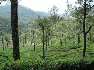 A Weekend Drive From Bengaluru To Valparai