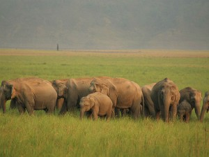 Up And Close With Wildlife At The Rajaji National Park