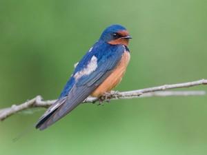 Attiveri Bird Sanctuary In Uttara Kannada