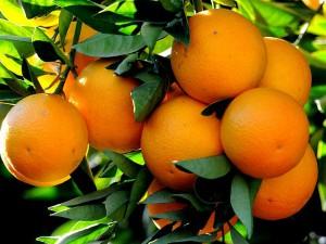 The Orange Festival Of Jampui Hills At Tripura