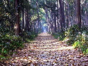 Get A Dose Of Wildlife At The Dudhwa National Park