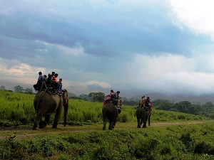 Best Destinations For Elephant Safaris In India